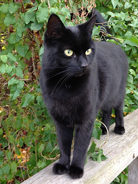a black cat standing on the railing of a bridge