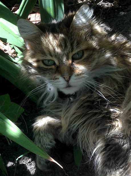 Cat resting in the shadows