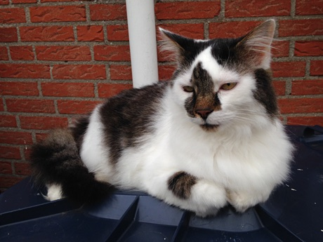 A cat resting on top of a garbage can