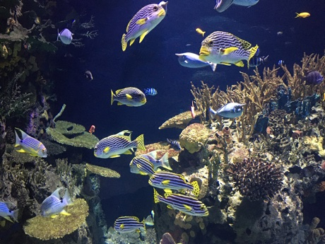 Colorful fish in Oceanium