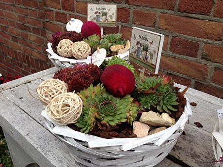 Garden baskets with succulents