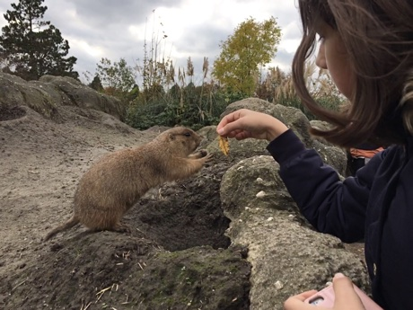 Alice handing a leaf to a prairie dog