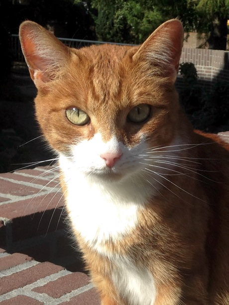 Close-up of a red cat on a bridge