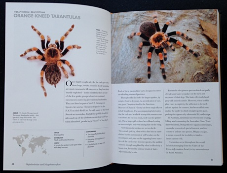 Inside Spiders of the World