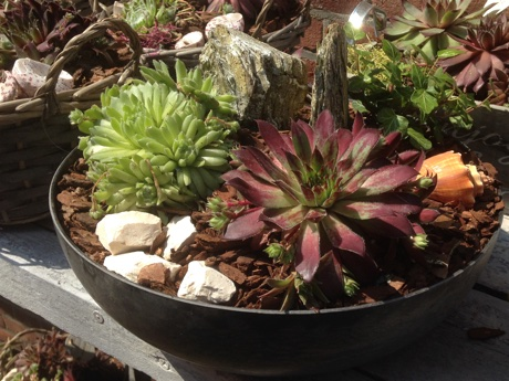 Succulents in a metal bowl