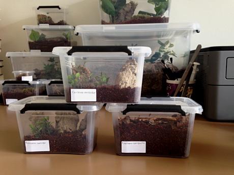 The three sling terrariums on my desk