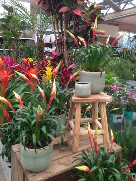 Various bromeliads on display